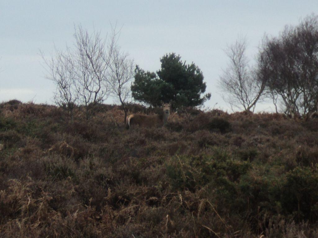 We saw a few deer as we walked