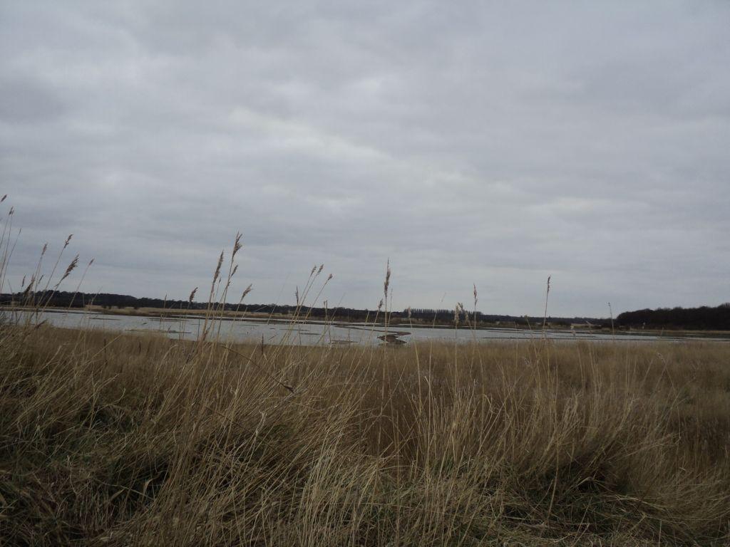 Minsmere nature reserve