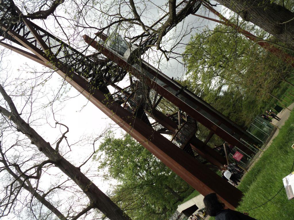 Rhizotron and Xstrata Treetop